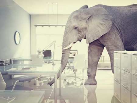 Business - Elephant in the room